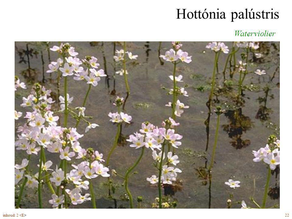 Hydrócharis mórsus-ránae Kikkerbeet vrouwelijke bloemen (6-7) alleenstaand (mannelijke bloemen 1–5 bijeen) vrouwelijk mannelijk inhoud: 2 23