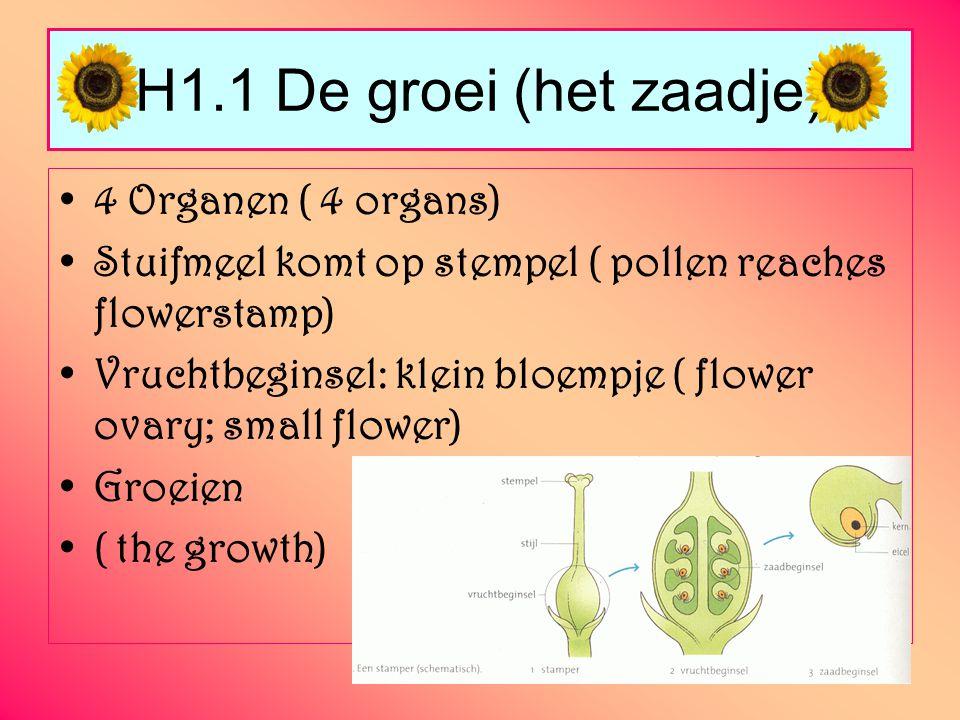 H1.2 Hoe ziet een bloembol eruit.