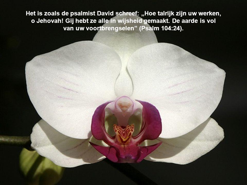 """Het is zoals de psalmist David schreef: """"Hoe talrijk zijn uw werken, o Jehovah! Gij hebt ze alle in wijsheid gemaakt. De aarde is vol van uw voortbren"""