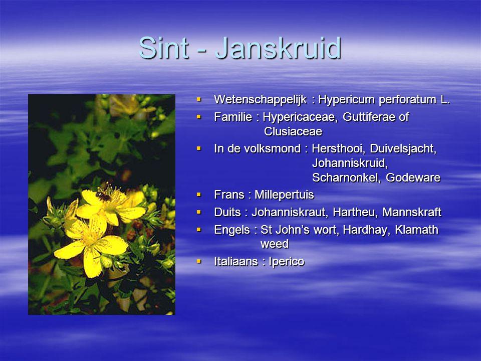 Sint - Janskruid  Wetenschappelijk : Hypericum perforatum L.  Familie : Hypericaceae, Guttiferae of Clusiaceae  In de volksmond : Hersthooi, Duivel