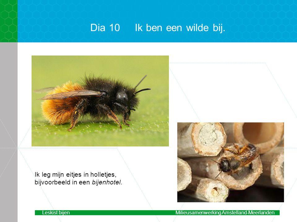 Dia 10Ik ben een wilde bij.Ik leg mijn eitjes in holletjes, bijvoorbeeld in een bijenhotel.