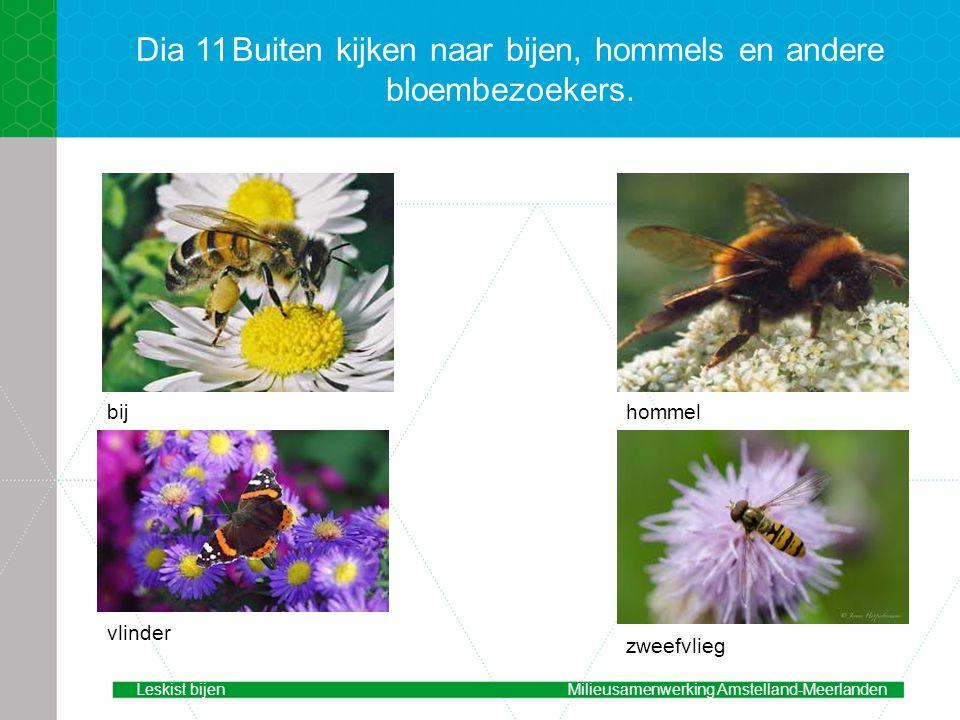 Dia 11Buiten kijken naar bijen, hommels en andere bloembezoekers.