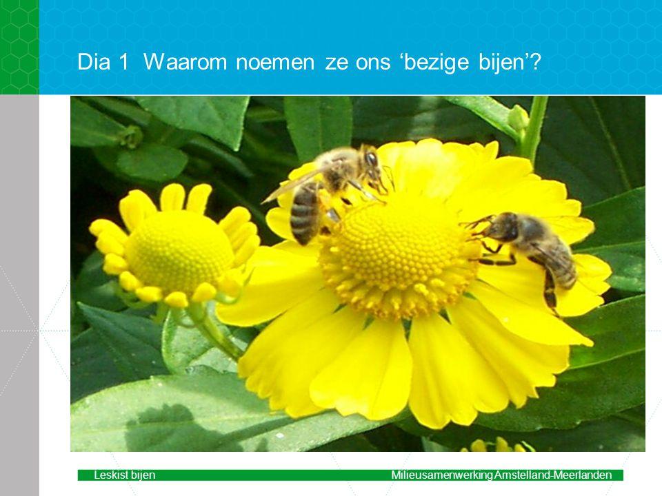 Dia 1Waarom noemen ze ons 'bezige bijen'? Leskist bijenMilieusamenwerking Amstelland-Meerlanden
