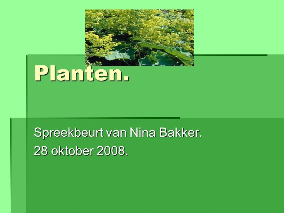 Planten. Spreekbeurt van Nina Bakker. 28 oktober 2008.