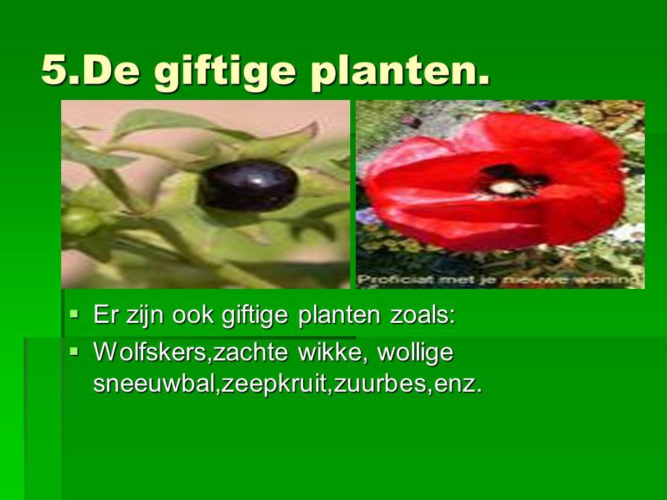 5.De giftige planten.  Er zijn ook giftige planten zoals:  Wolfskers,zachte wikke, wollige sneeuwbal,zeepkruit,zuurbes,enz.