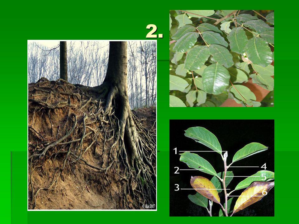 3.Eetbare delen van een plant. Wat eten wij nou eigenlijk.