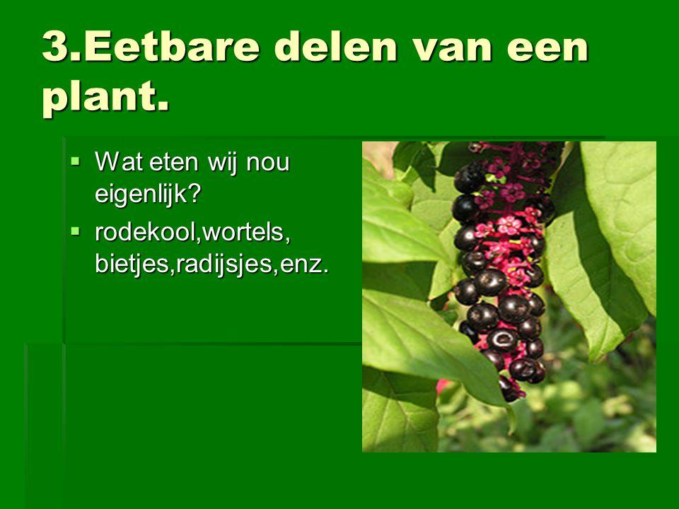 3.Eetbare delen van een plant.  Wat eten wij nou eigenlijk?  rodekool,wortels, bietjes,radijsjes,enz.