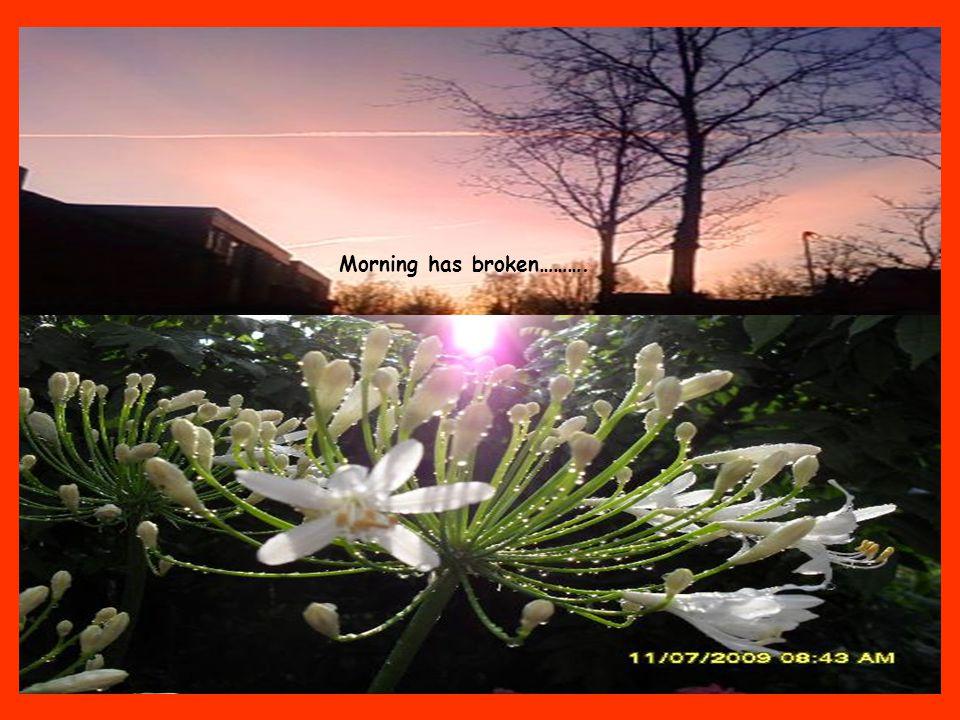 Zoals iedere morgen begroet ik mijn planten en de prachtige zonsopkomst.