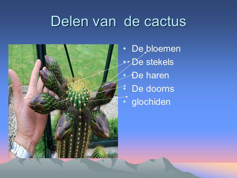Klimaat + aanpassingen van de plant Warm Droge grond Woestijn Regenbui grote cactus 1ton water stekels beschermen 2500 soorten cactussen