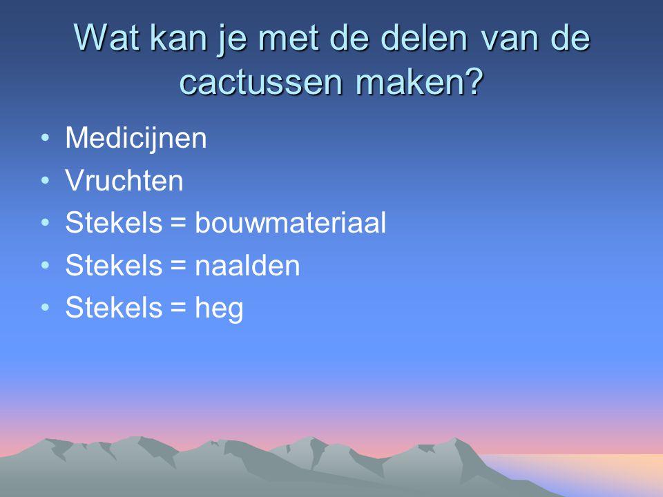 Wat kan je met de delen van de cactussen maken? Medicijnen Vruchten Stekels = bouwmateriaal Stekels = naalden Stekels = heg