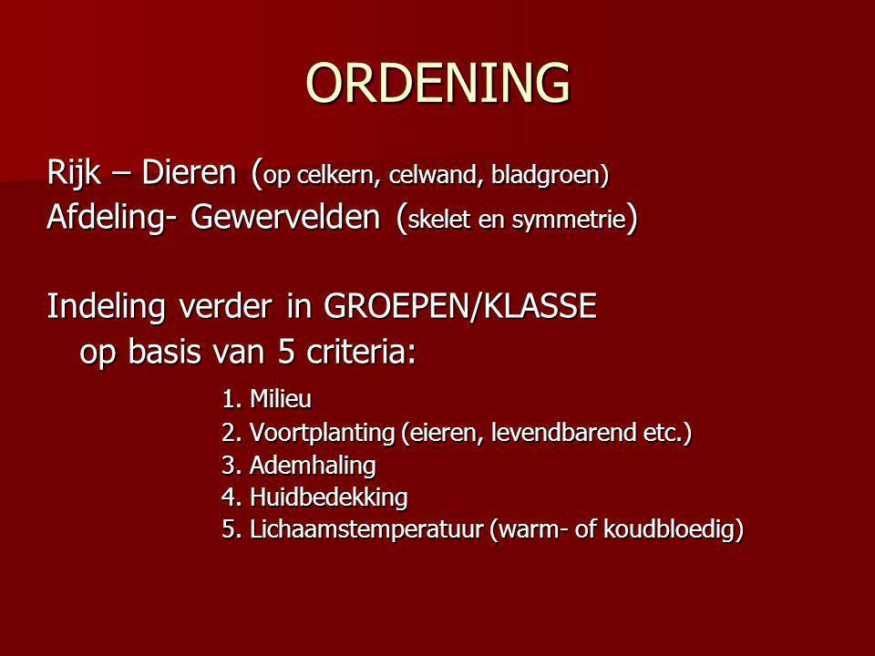 ORDENING Rijk – Dieren ( op celkern, celwand, bladgroen) Afdeling- Gewervelden ( skelet en symmetrie ) Indeling verder in GROEPEN/KLASSE op basis van 5 criteria: 1.