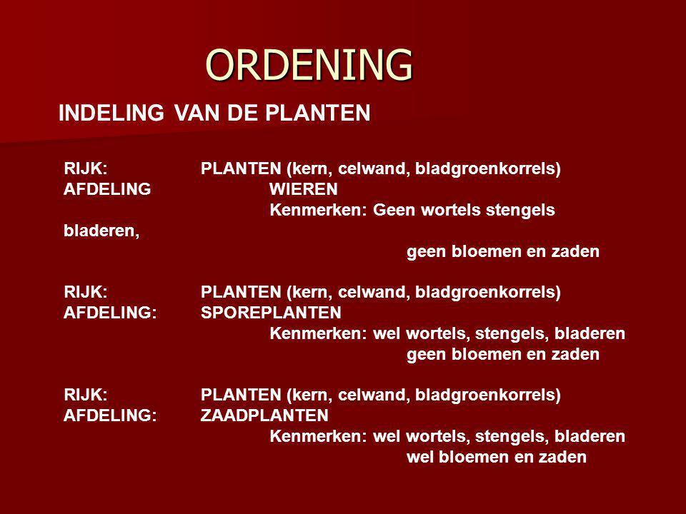 ORDENING RIJK:PLANTEN (kern, celwand, bladgroenkorrels) AFDELING WIEREN Kenmerken: Geen wortels stengels bladeren, geen bloemen en zaden RIJK:PLANTEN (kern, celwand, bladgroenkorrels) AFDELING:SPOREPLANTEN Kenmerken: wel wortels, stengels, bladeren geen bloemen en zaden RIJK:PLANTEN (kern, celwand, bladgroenkorrels) AFDELING:ZAADPLANTEN Kenmerken: wel wortels, stengels, bladeren wel bloemen en zaden INDELING VAN DE PLANTEN