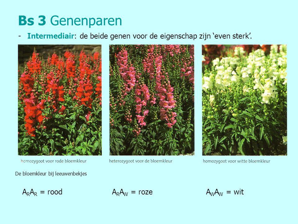Bs 3Genenparen - Intermediair: de beide genen voor de eigenschap zijn 'even sterk'. De bloemkleur bij leeuwenbekjes A R A R = rood A R A W = roze A W