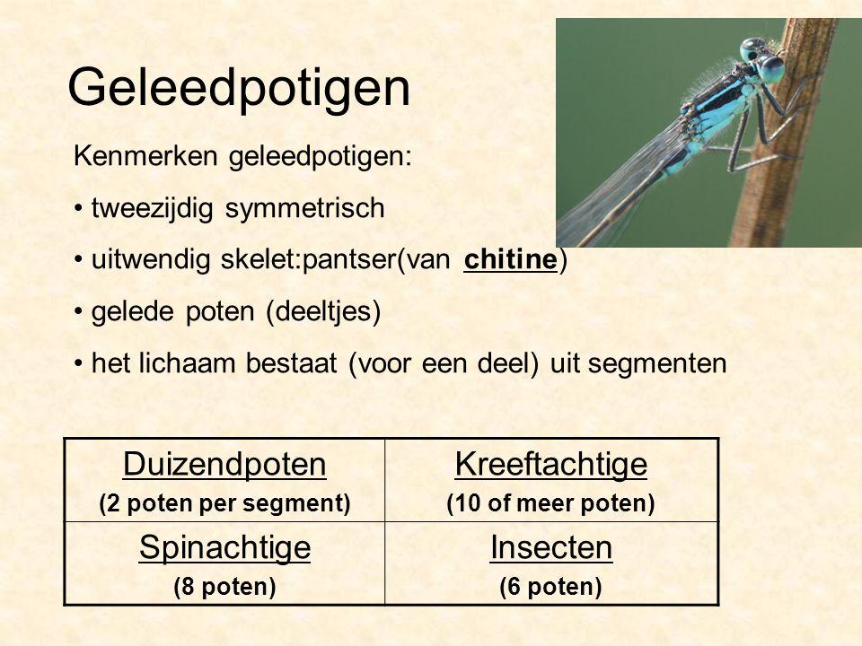 Geleedpotigen Duizendpoten (2 poten per segment) Kreeftachtige (10 of meer poten) Spinachtige (8 poten) Insecten (6 poten) Kenmerken geleedpotigen: tw