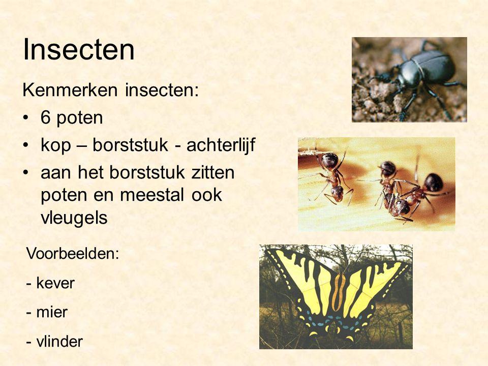 Insecten Kenmerken insecten: 6 poten kop – borststuk - achterlijf aan het borststuk zitten poten en meestal ook vleugels Voorbeelden: - kever - mier -