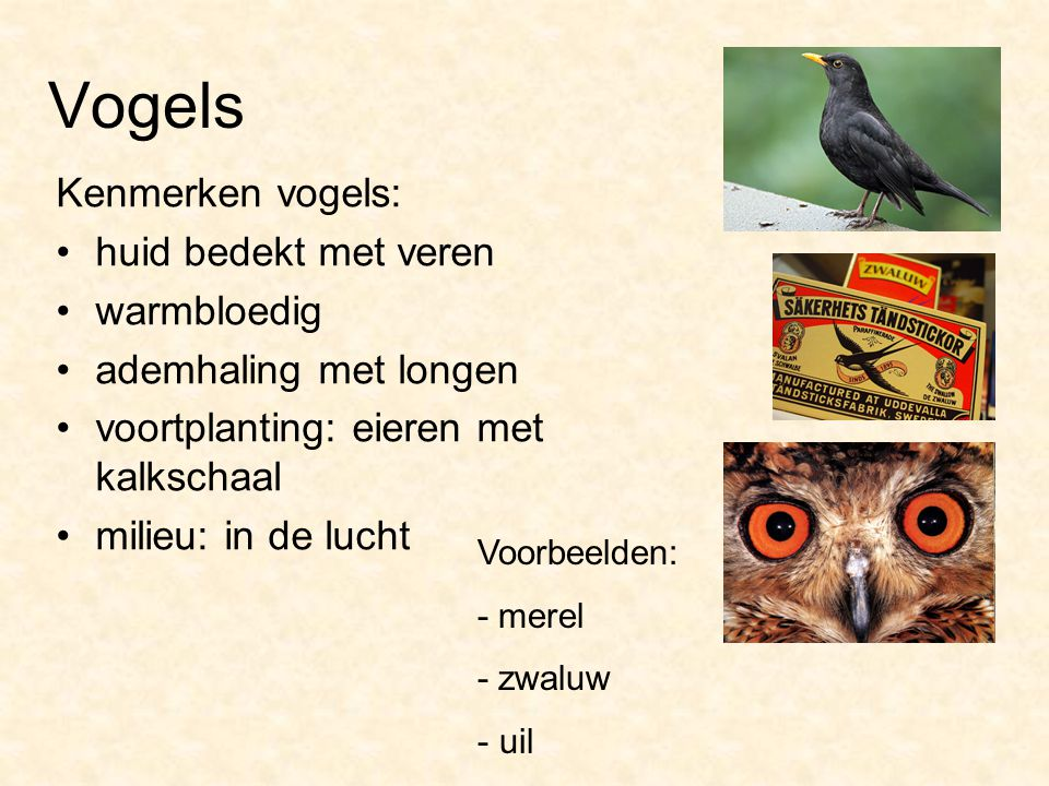 Vogels Kenmerken vogels: huid bedekt met veren warmbloedig ademhaling met longen voortplanting: eieren met kalkschaal milieu: in de lucht Voorbeelden:
