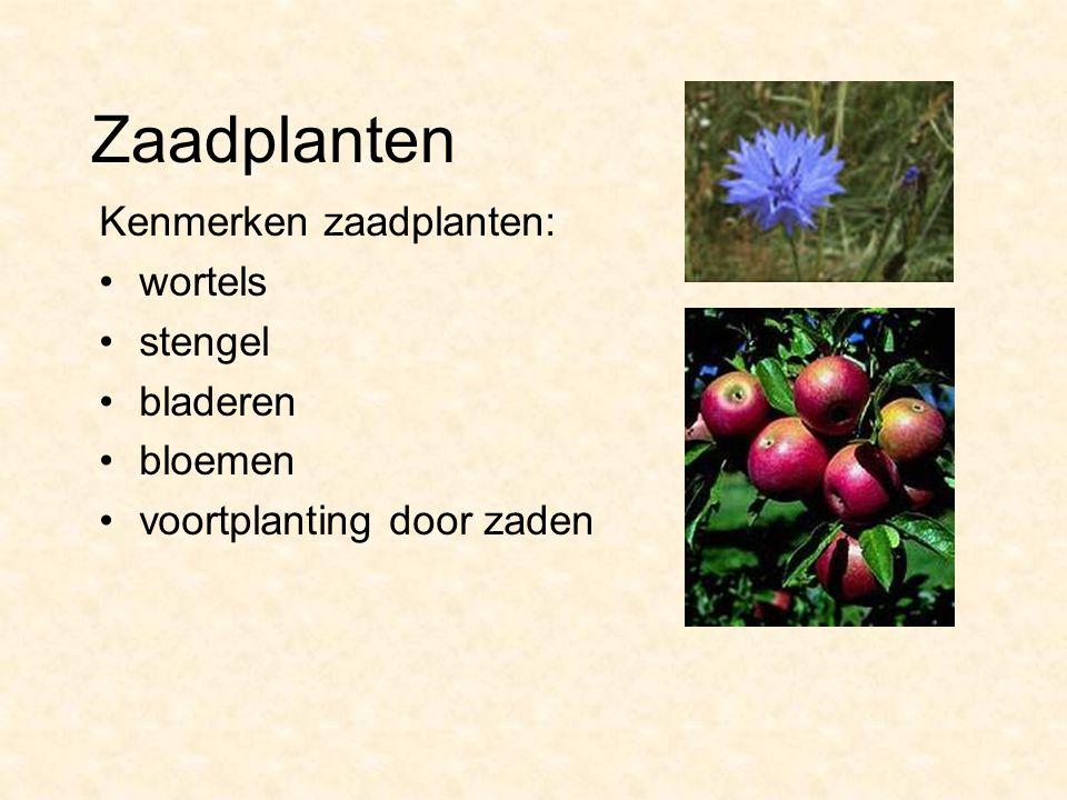 Zaadplanten Kenmerken zaadplanten: wortels stengel bladeren bloemen voortplanting door zaden