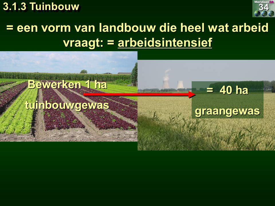 = een vorm van landbouw die heel wat arbeid vraagt: = arbeidsintensief Bewerken 1 ha tuinbouwgewas = 40 ha graangewas34 3.1.3 Tuinbouw