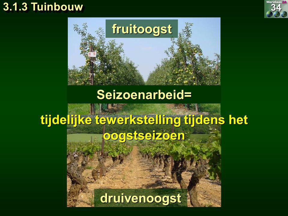 Seizoenarbeid= fruitoogst druivenoogst34 tijdelijke tewerkstelling tijdens het oogstseizoen