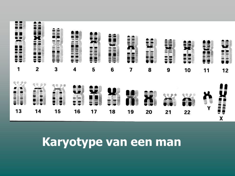 Menselijke genen zijn verpakt in ………….. chromosomenparen. 22 autosomen + 2 geslachtschromosomen Iedere cel bezit een complete set chromosomen uitzonde