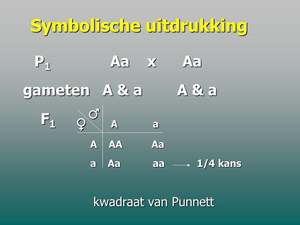 C. 2 de Mendelwet : Splitsingswet De nakomelingen van 2 heterozygoten voor één kenmerk hebben 3/4 kans dat het dominante kenmerk van de ouders tot uit