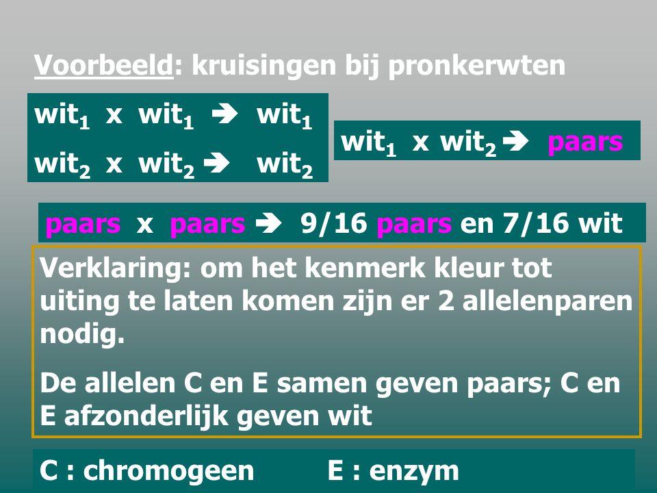 E.CRYPTOMERIE Een kenmerk wordt soms bepaald door meerdere genen.