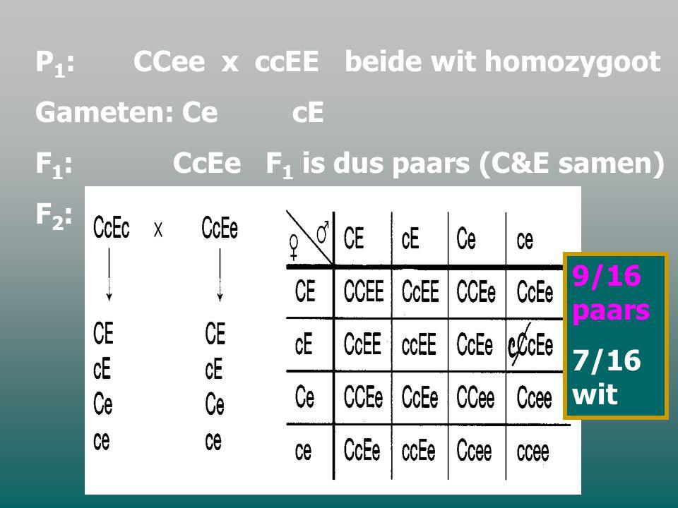 Voorbeeld: kruisingen bij pronkerwten wit 1 x wit 1  wit 1 wit 2 x wit 2  wit 2 wit 1 x wit 2  paars paars x paars  9/16 paars en 7/16 wit Verklaring: om het kenmerk kleur tot uiting te laten komen zijn er 2 allelenparen nodig.