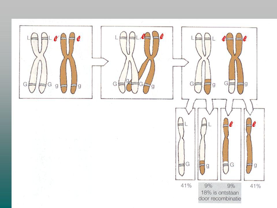 F. GEKOPPELDE GENEN Gekoppelde genen zijn genen voor verschillende kenmerken, die zich op hetzelfde chromosoom bevinden. Ze zullen dus samen overerven