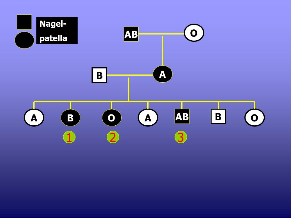 1.Op chromosoom 9 bij de mens vinden we het gen dat de ABO-bloedgroep bepaalt. Ook het dominante allel voor het nagelpatella-syndroom kan op dit chrom