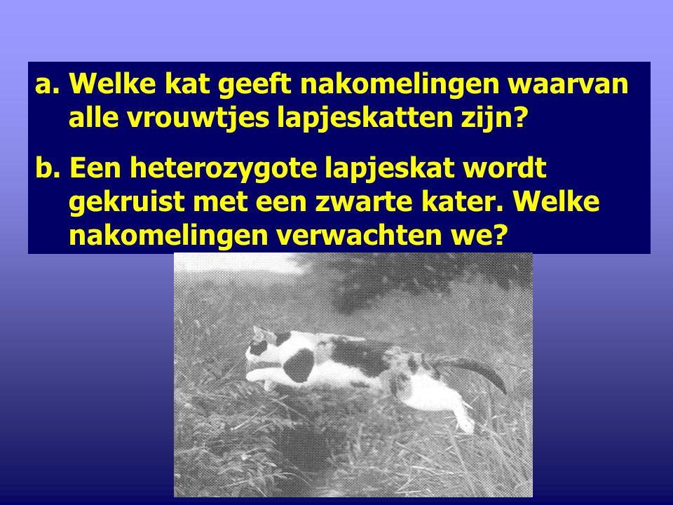 4. Bij katten is de kleur geslachtsgebonden. Katers kunnen rood of zwart zijn. Vrouwtjes kunnen rood, zwart of rood-zwart zijn. Naast dit geslachtsgeb