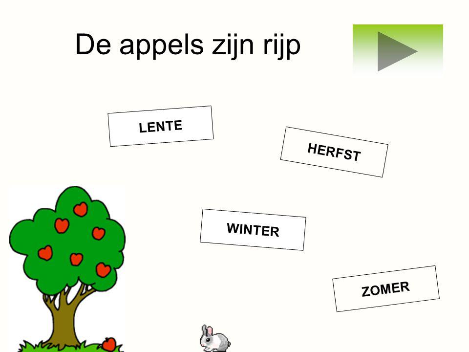 De appels zijn rijp LENTE WINTER ZOMER HERFST