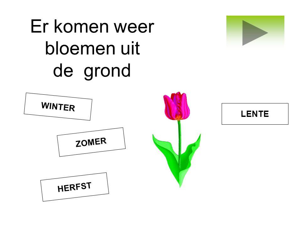 Er komen weer bloemen uit de grond ZOMER LENTE WINTER HERFST