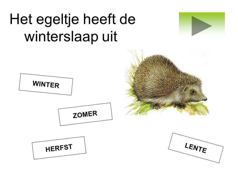 Het egeltje heeft de winterslaap uit ZOMER LENTE WINTER HERFST