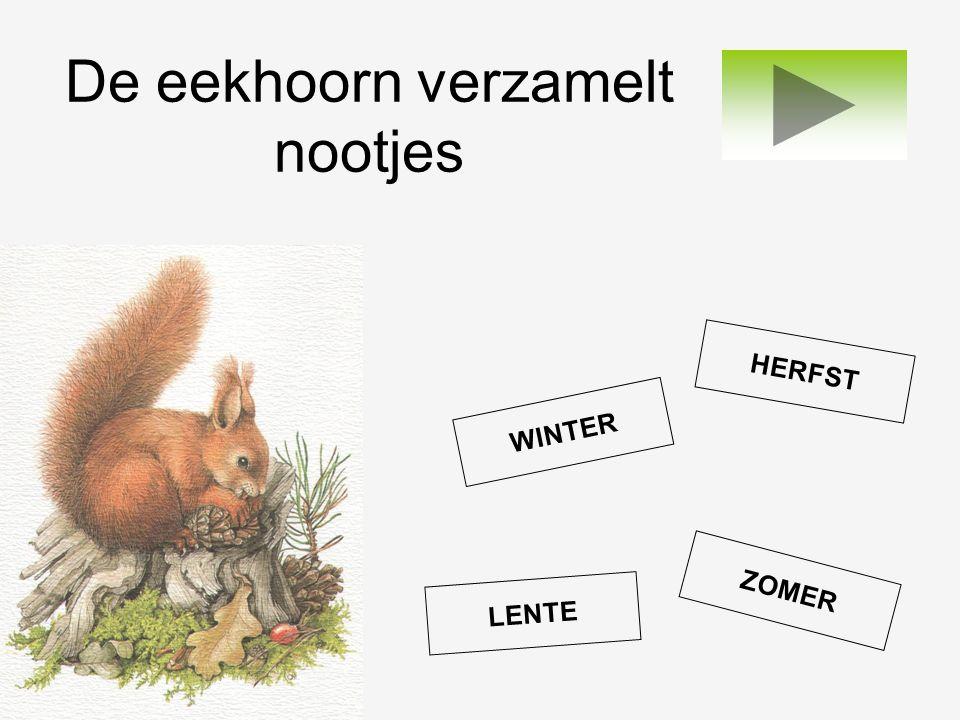 De eekhoorn verzamelt nootjes LENTE WINTER ZOMER HERFST