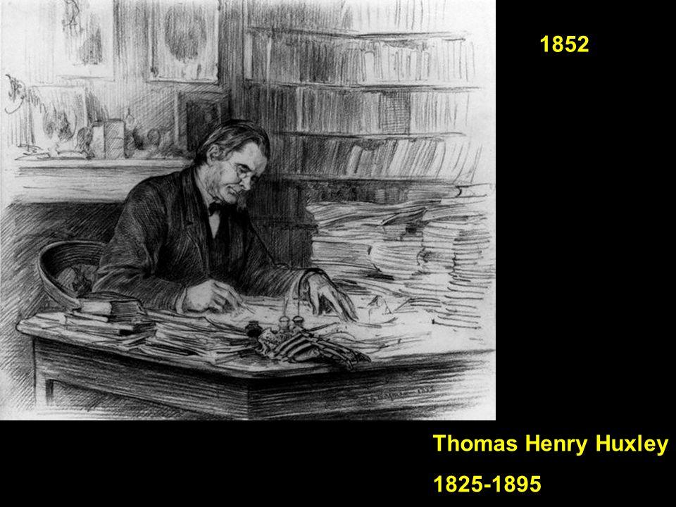 Thomas Henry Huxley 1825-1895 1852
