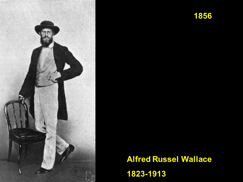 Alfred Russel Wallace 1823-1913 1856
