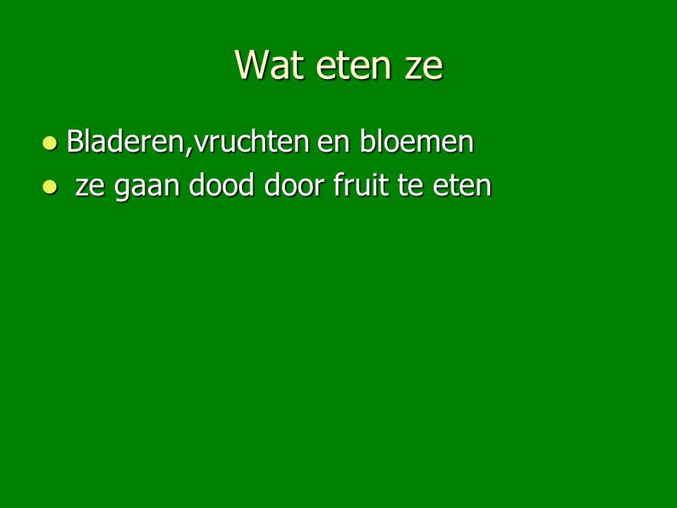 Wat eten ze Bladeren,vruchten en bloemen Bladeren,vruchten en bloemen ze gaan dood door fruit te eten ze gaan dood door fruit te eten
