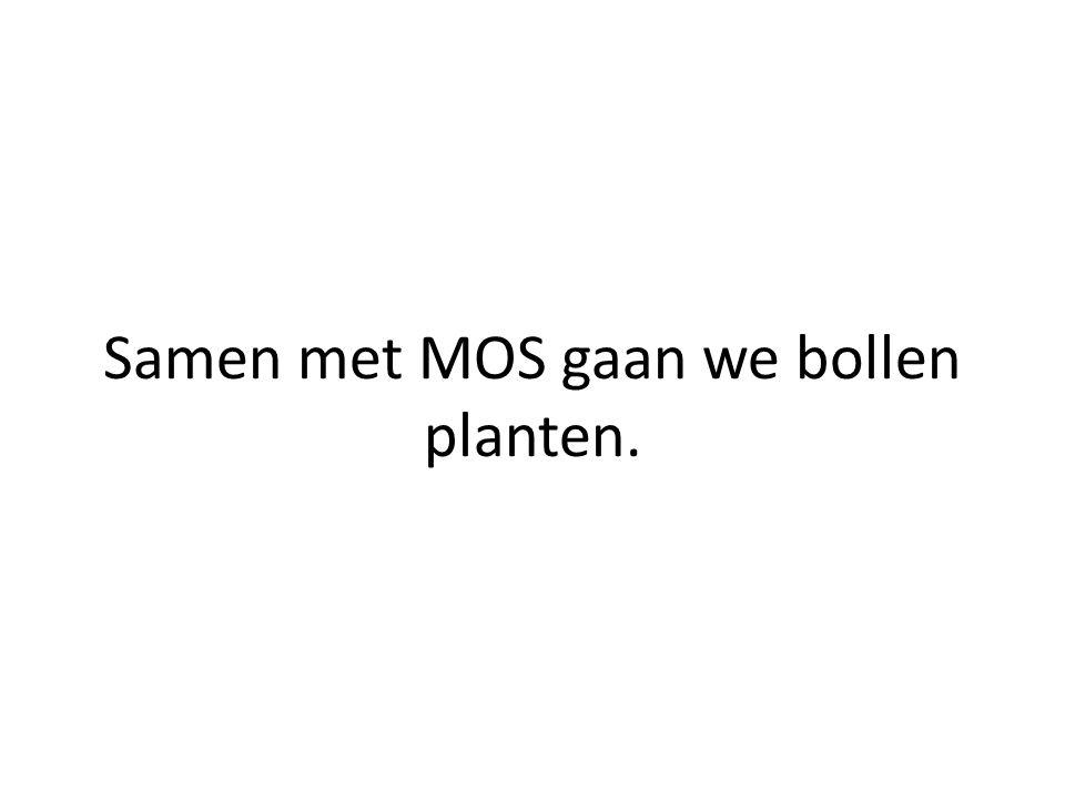 Samen met MOS gaan we bollen planten.