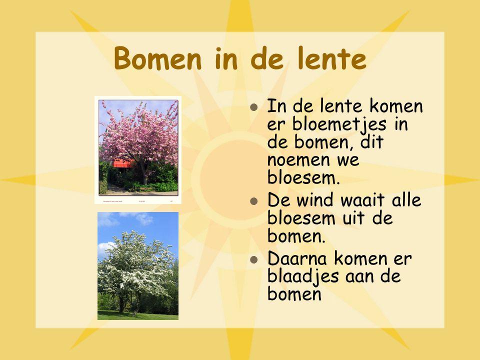 Bomen in de lente In de lente komen er bloemetjes in de bomen, dit noemen we bloesem.