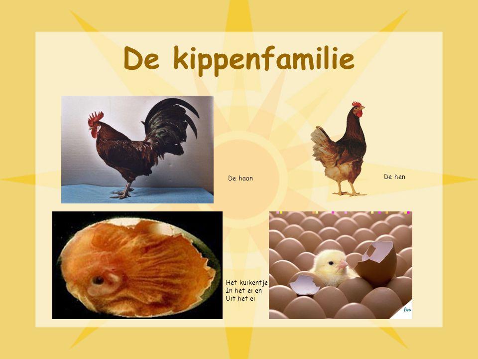 De kippenfamilie De haan De hen Het kuikentje In het ei en Uit het ei