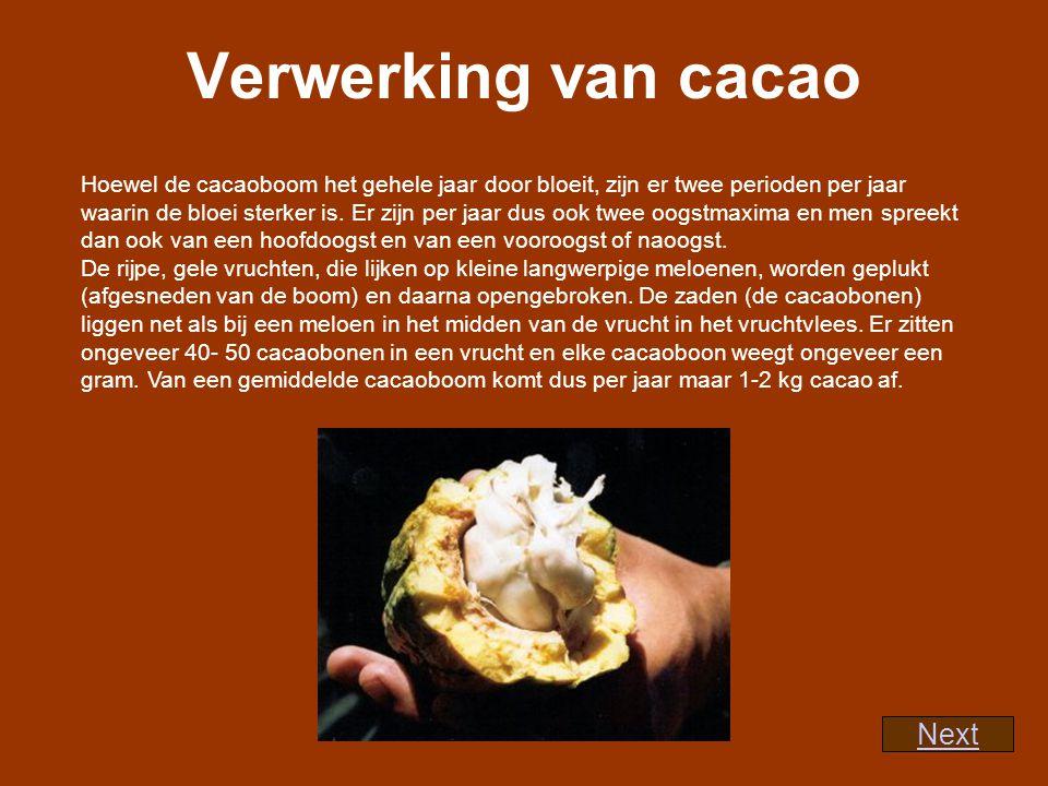 De zaden worden met het aanhangend vruchtmoes gestort in houten bakken of op een grote hoop op de grond, op een bedje van bananenbladeren.
