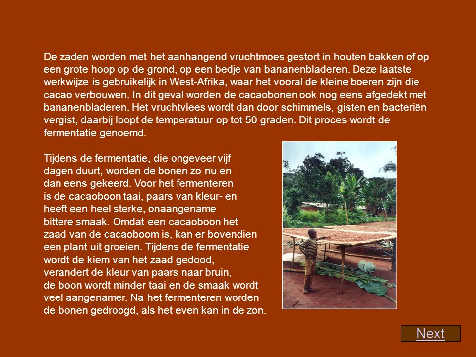 Als het echter regent na de cacao-oogst, dan worden de bonen vaak gedroogd in z.g.
