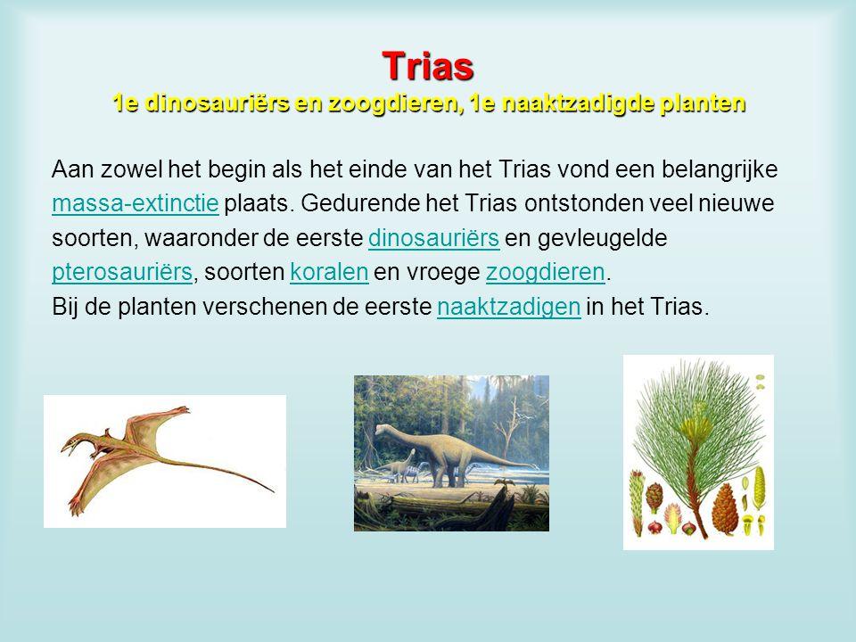 Trias 1e dinosauriërs en zoogdieren, 1e naaktzadigde planten Aan zowel het begin als het einde van het Trias vond een belangrijke massa-extinctiemassa