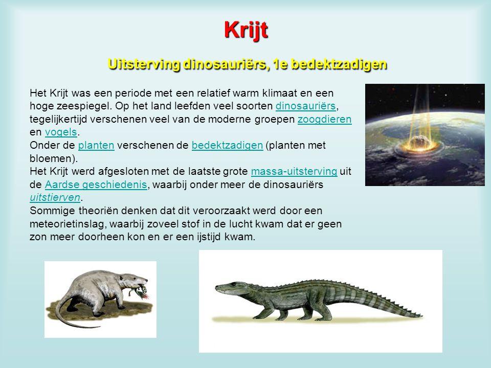 Krijt Uitsterving dinosauriërs, 1e bedektzadigen Het Krijt was een periode met een relatief warm klimaat en een hoge zeespiegel. Op het land leefden v