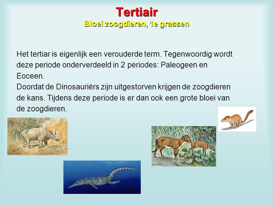 Tertiair Bloei zoogdieren, 1e grassen Het tertiar is eigenlijk een verouderde term. Tegenwoordig wordt deze periode onderverdeeld in 2 periodes: Paleo