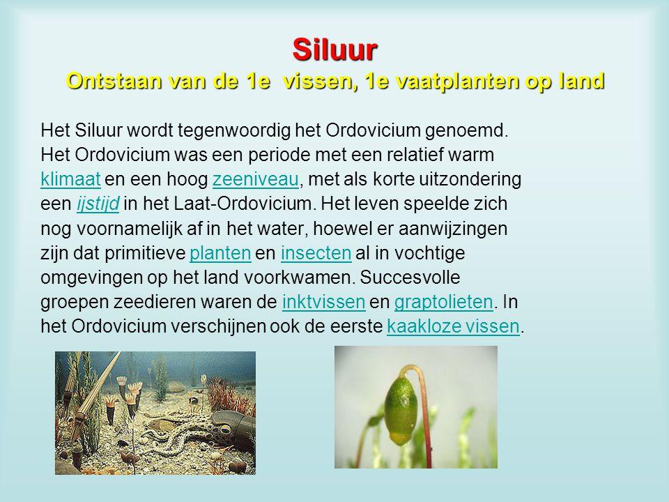 Siluur Ontstaan van de 1e vissen, 1e vaatplanten op land Het Siluur wordt tegenwoordig het Ordovicium genoemd. Het Ordovicium was een periode met een
