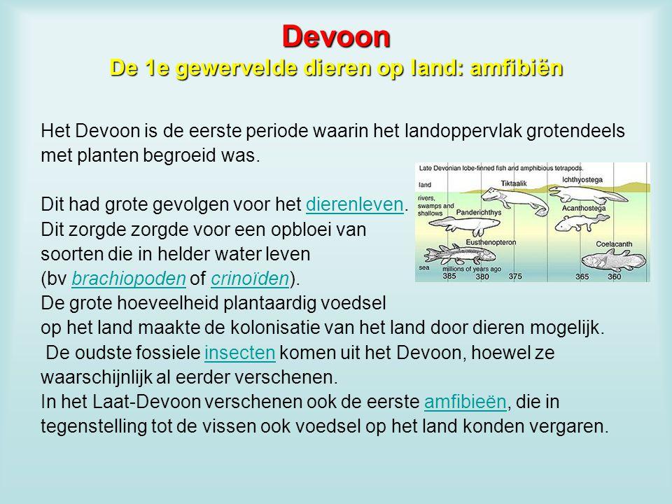 Devoon De 1e gewervelde dieren op land: amfibiën Het Devoon is de eerste periode waarin het landoppervlak grotendeels met planten begroeid was. Dit ha