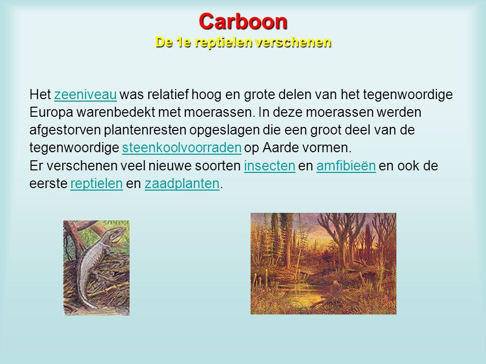 Carboon De 1e reptielen verschenen Het zeeniveau was relatief hoog en grote delen van het tegenwoordigezeeniveau Europa warenbedekt met moerassen. In