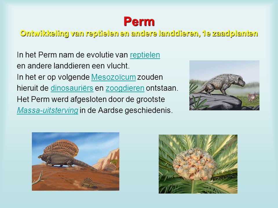 Perm Ontwikkeling van reptielen en andere landdieren, 1e zaadplanten In het Perm nam de evolutie van reptielenreptielen en andere landdieren een vluch