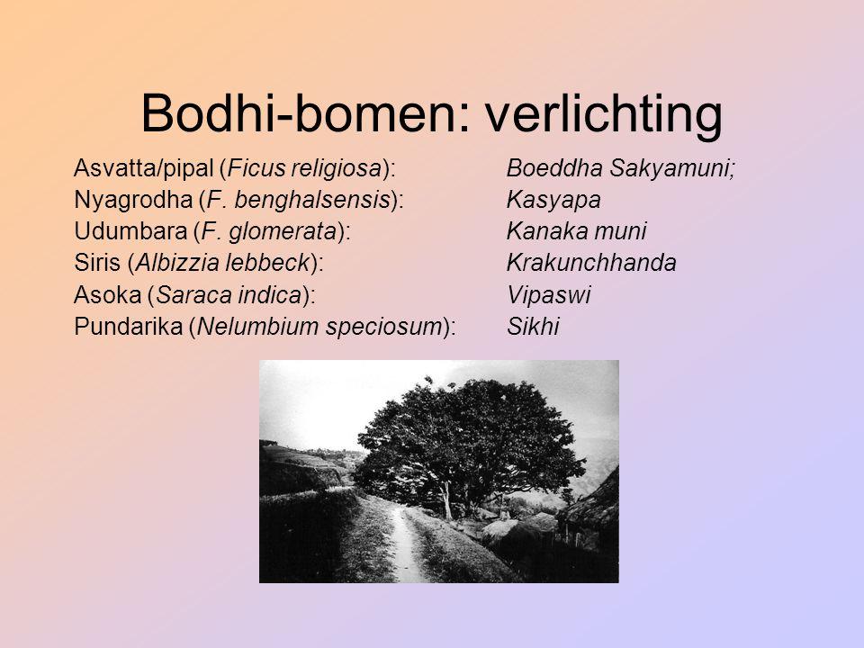 Bodhi-bomen: verlichting Asvatta/pipal (Ficus religiosa):Boeddha Sakyamuni; Nyagrodha (F. benghalsensis):Kasyapa Udumbara (F. glomerata): Kanaka muni